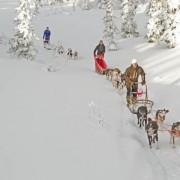 vandrertur_til_vikerfjell_-_hundekjoering_2012